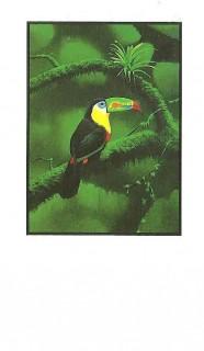NCA business cards El Tucan