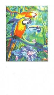 NCA business cards Tropical Caucus