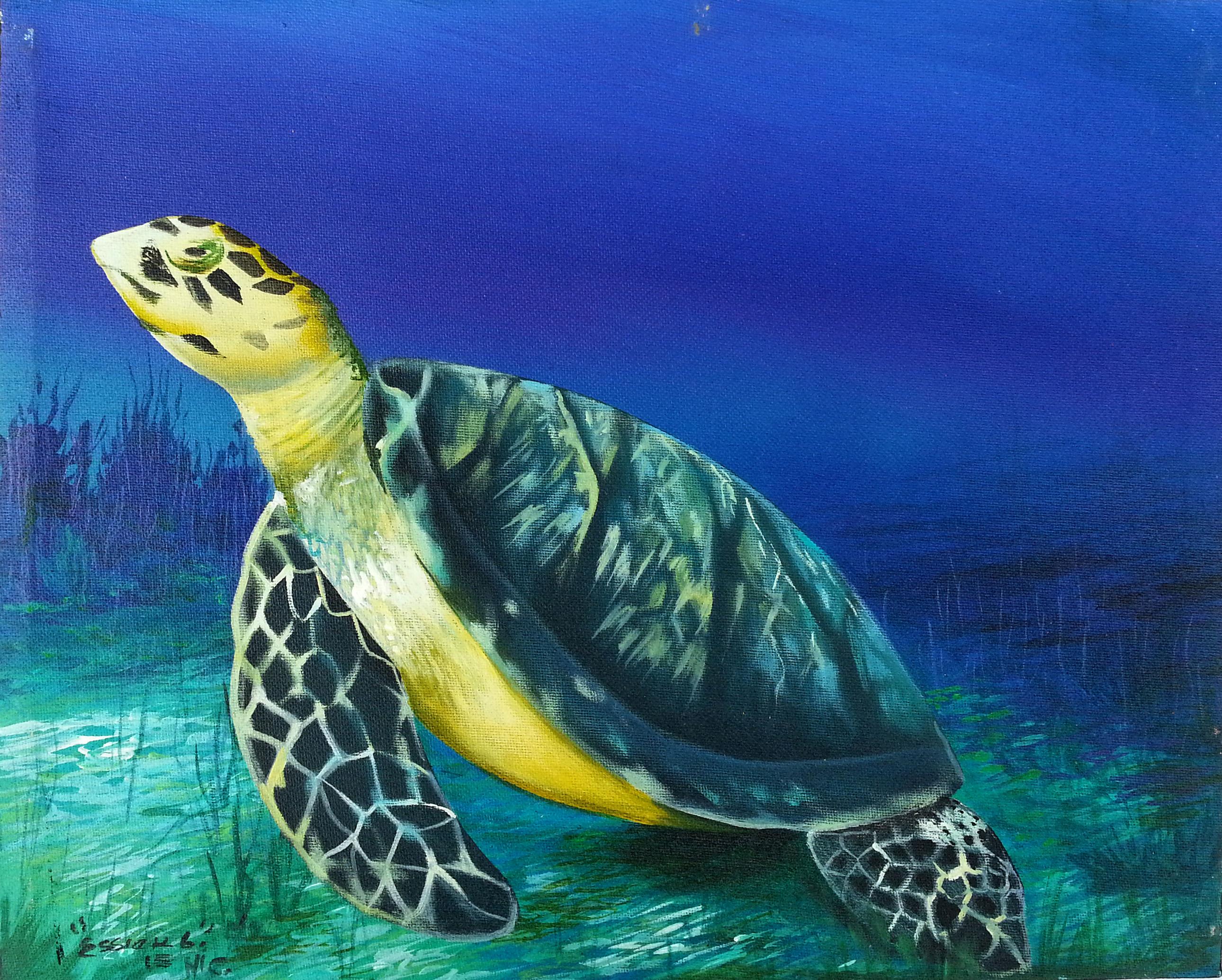 Snorkeling Tortuga Island - Traveling Venezuela - Apamate Tours ...